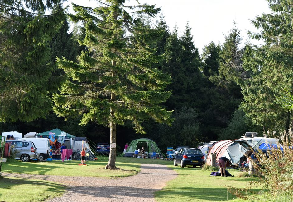 Camping at Forest Glade
