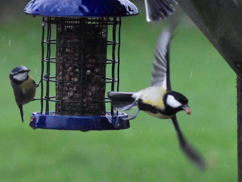 Bird feeder Wildlife