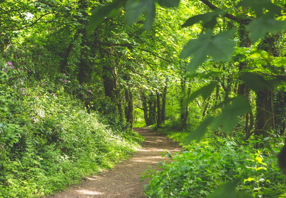 Forest walks at Forest Glade in the Blackdown Hills.