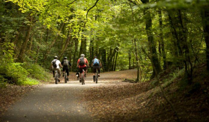 Things to do -Off-road mountain biking at Plym Bridge Woods, Devon