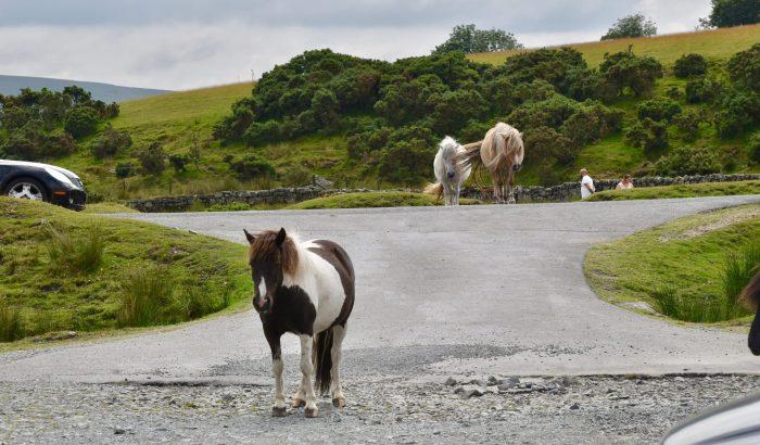 Things to do - Dartmoor roadblock