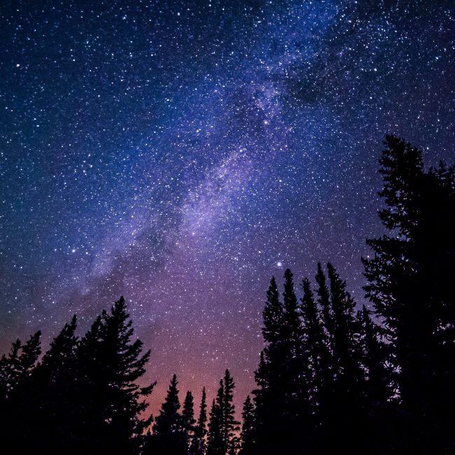 Stargazing Forest