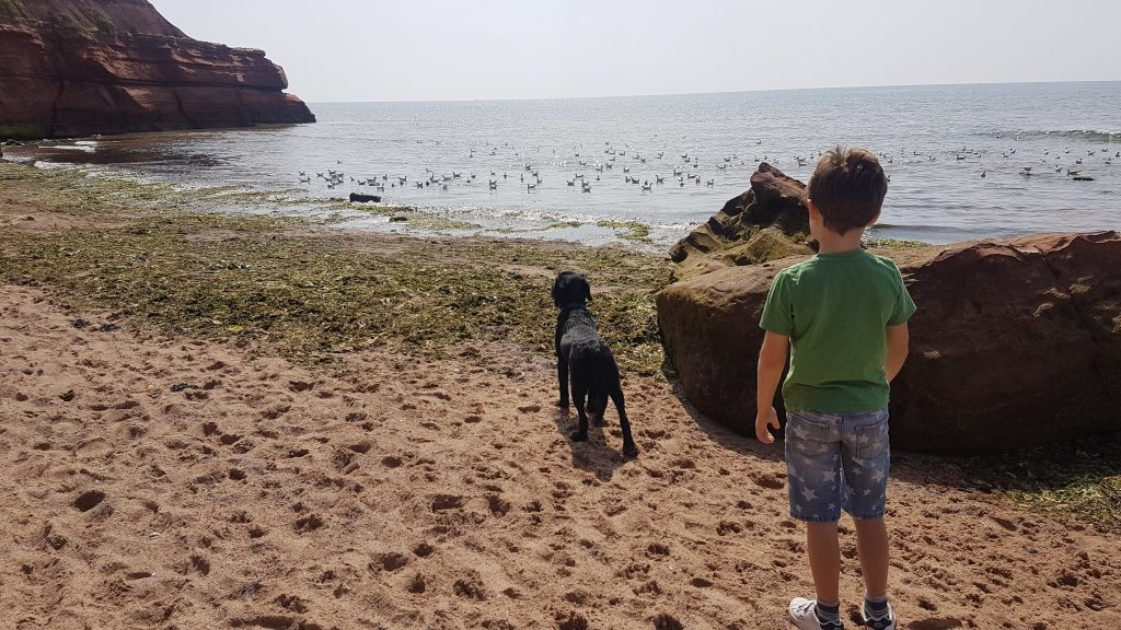 Orcombe Point Exmouth Beach - Things to do