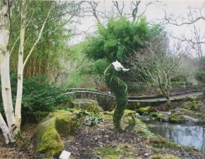 Topiary at Rosemoor