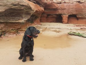 A dog on the beach at Orcombe Rocks