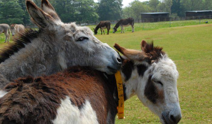 donkey sanctuary Sidmouth devon
