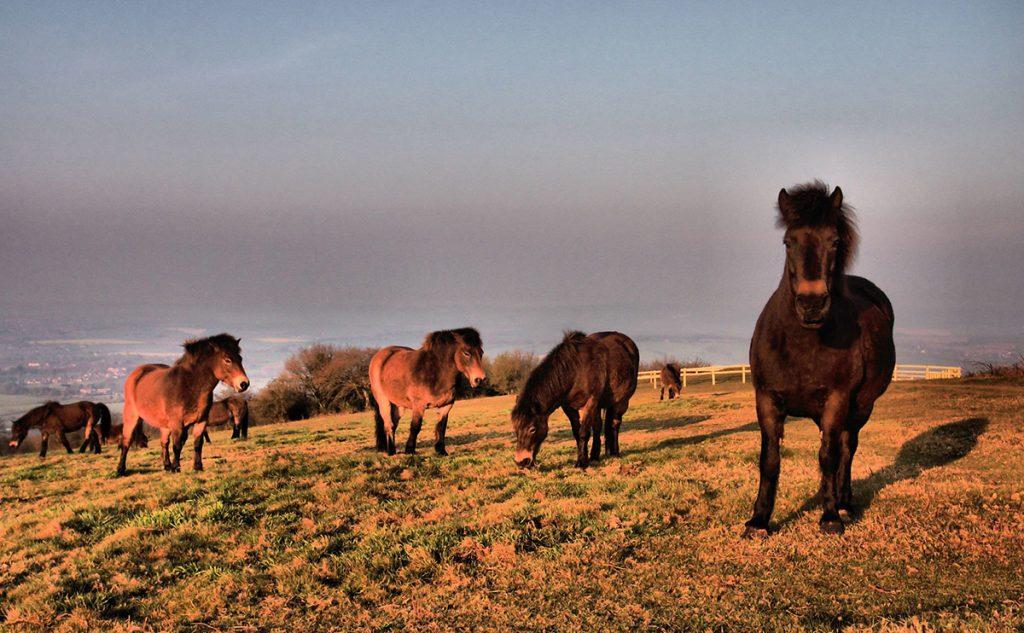 quantock pony trekking